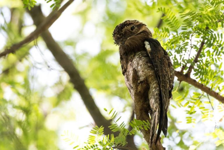 30 animales del Amazonas muy exóticos 16