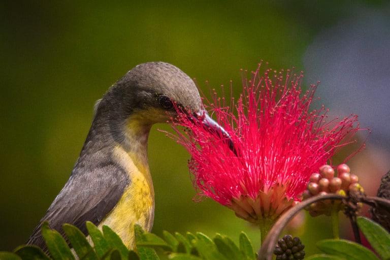 30 animales del Amazonas muy exóticos 15