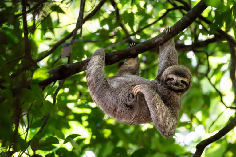 30 animales del Amazonas muy exóticos 6