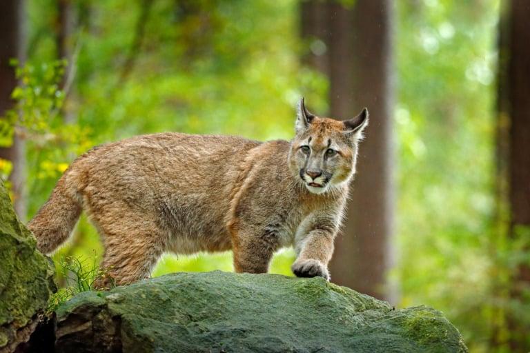 30 animales del Amazonas muy exóticos 9