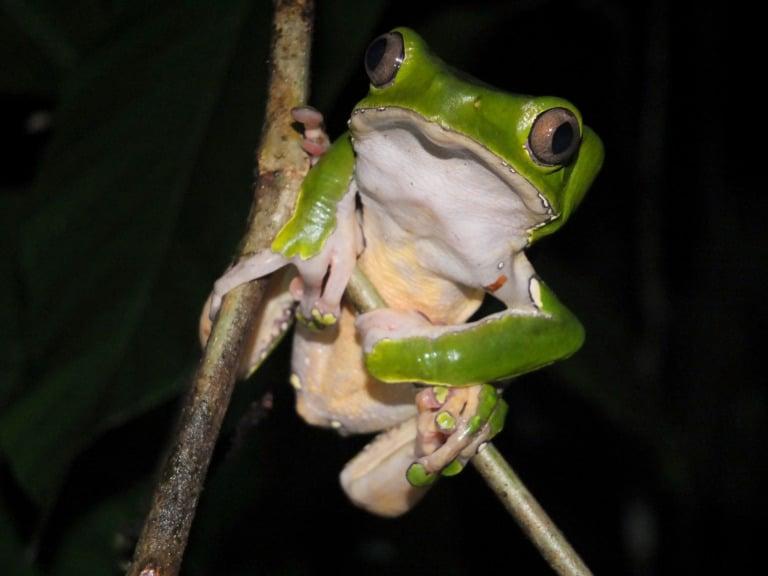 30 animales del Amazonas muy exóticos 22