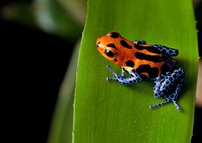 30 animales del Amazonas muy exóticos 19