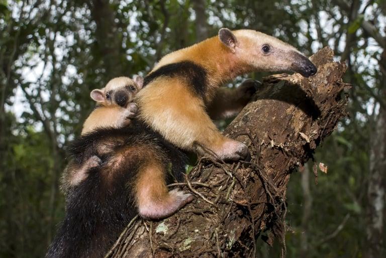 30 animales del Amazonas muy exóticos 7