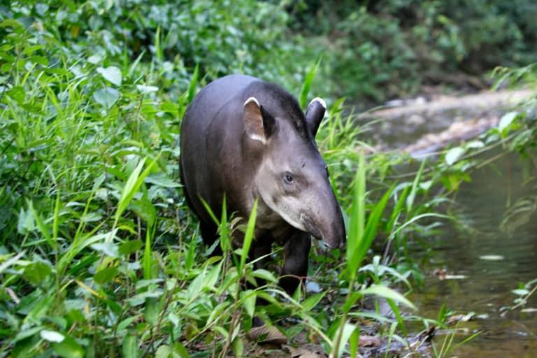 30 animales del Amazonas muy exóticos 11