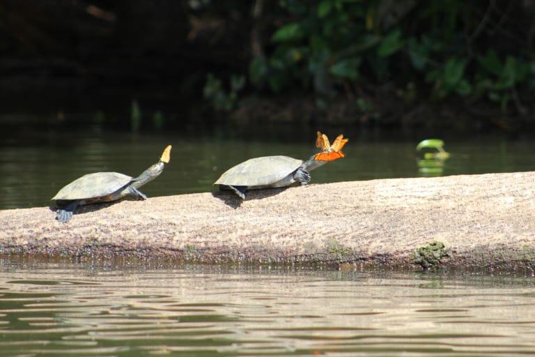 30 animales del Amazonas muy exóticos 20
