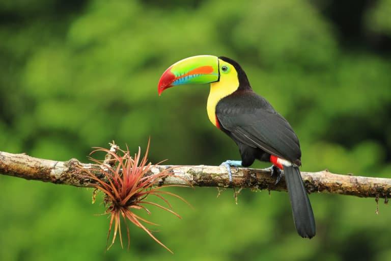 30 animales del Amazonas muy exóticos 17