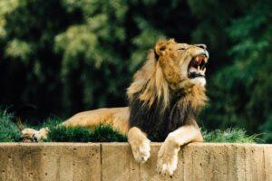 35 animales más peligrosos del mundo 3