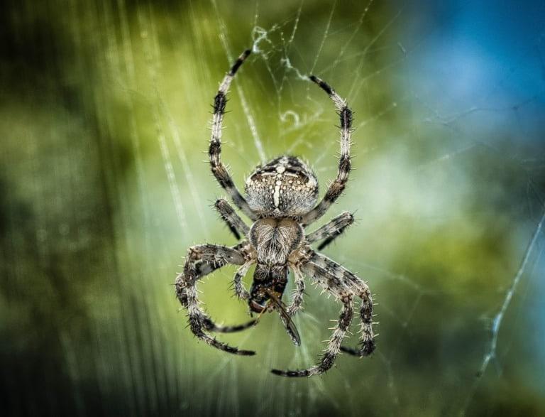 35 animales más peligrosos del mundo 11