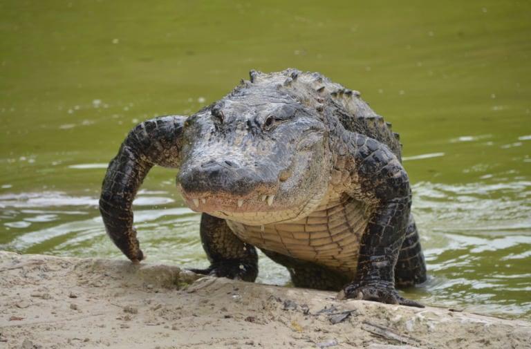 35 animales más peligrosos del mundo 7