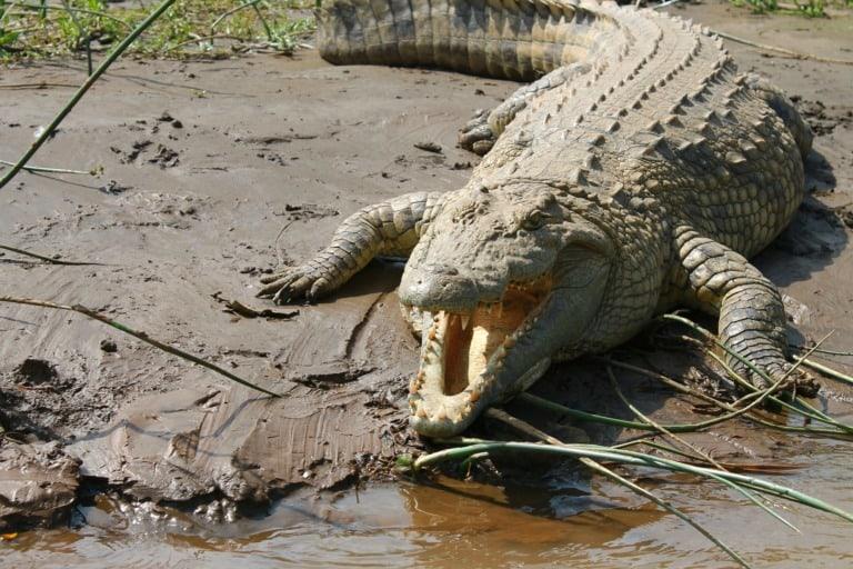 35 animales más peligrosos del mundo 27
