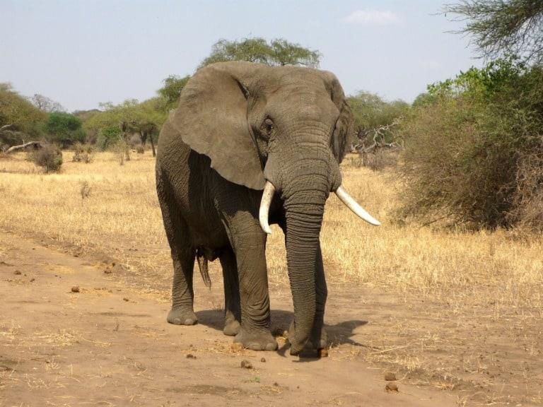 35 animales más peligrosos del mundo 25