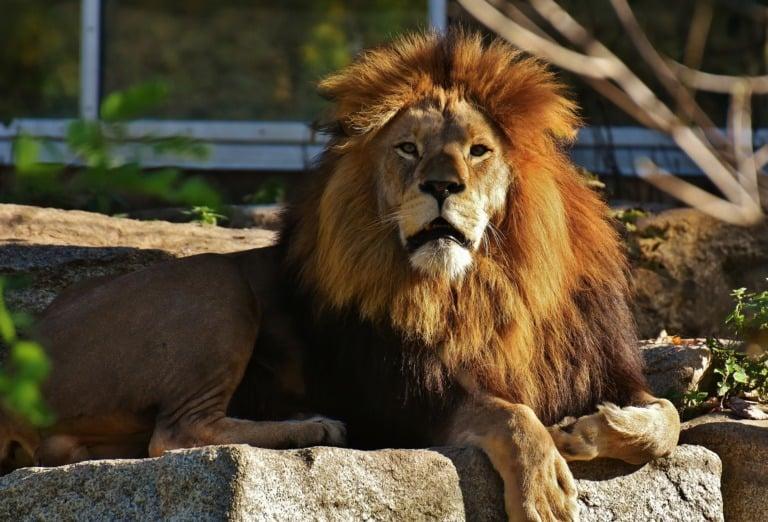 35 animales más peligrosos del mundo 24