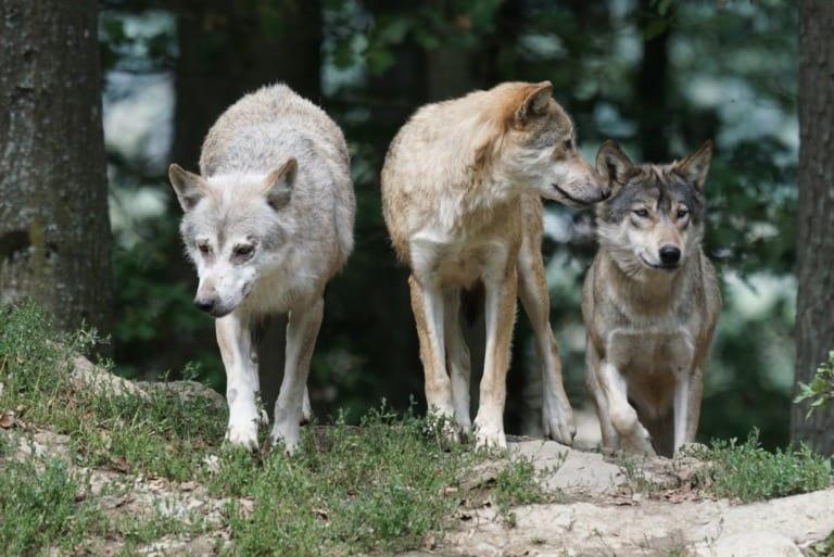 35 animales más peligrosos del mundo 13