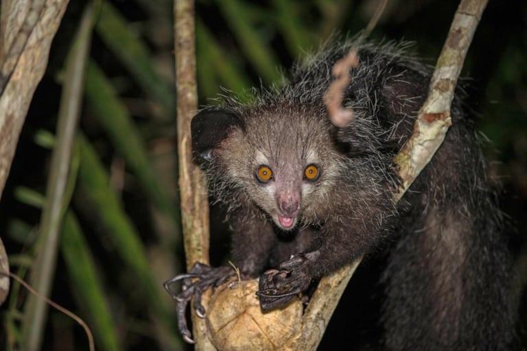 50 animales más raros del mundo 10