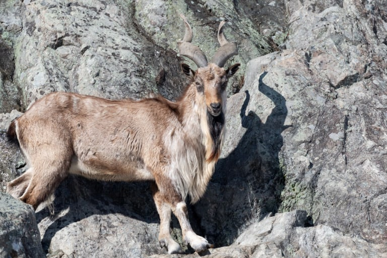 50 animales más raros del mundo 12