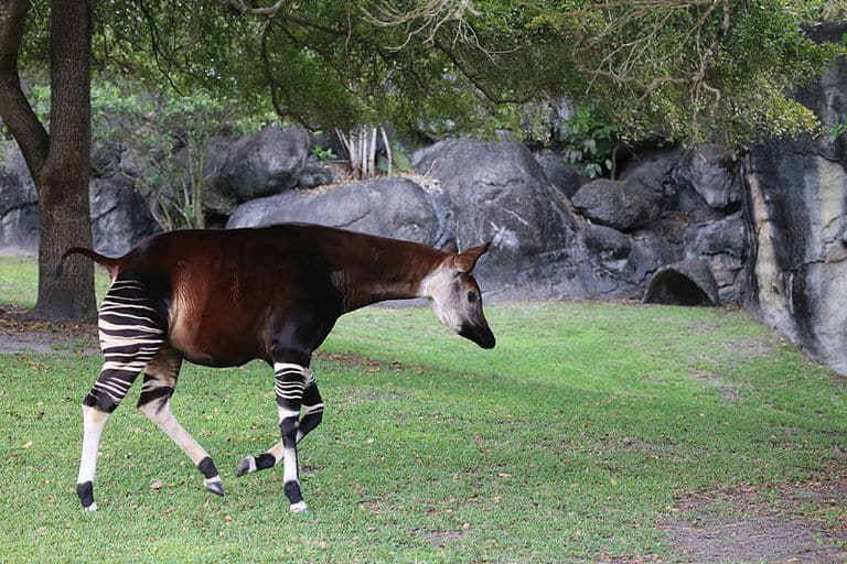 50 animales más raros del mundo 11