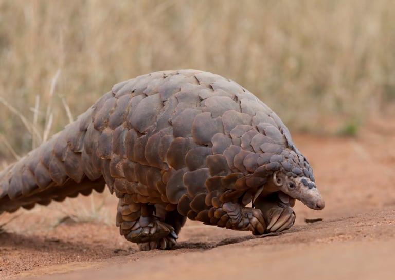 50 animales más raros del mundo 46
