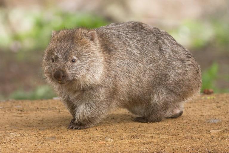 50 animales más raros del mundo 5