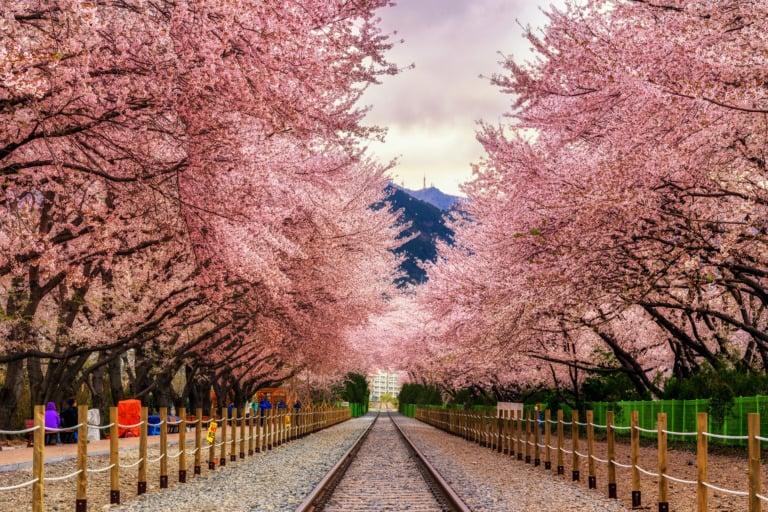 10 ciudades de Corea del Sur más bonitas 9
