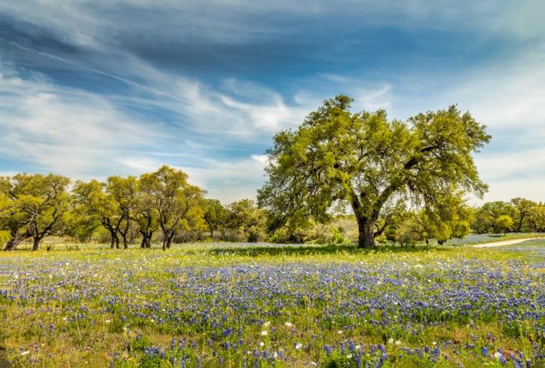 15 ciudades de Texas más bonitas 13