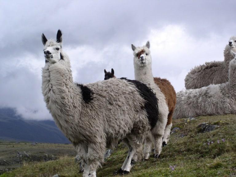 20 lugares turísticos de Ecuador 14