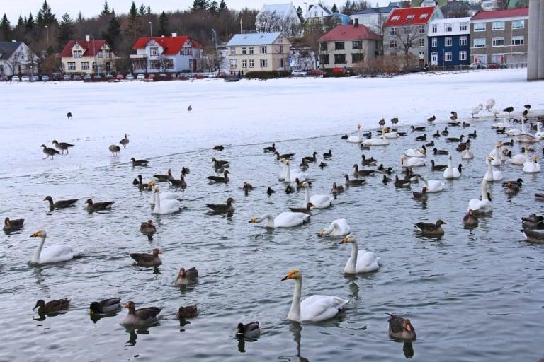 25 lugares que ver en Reikiavik 9