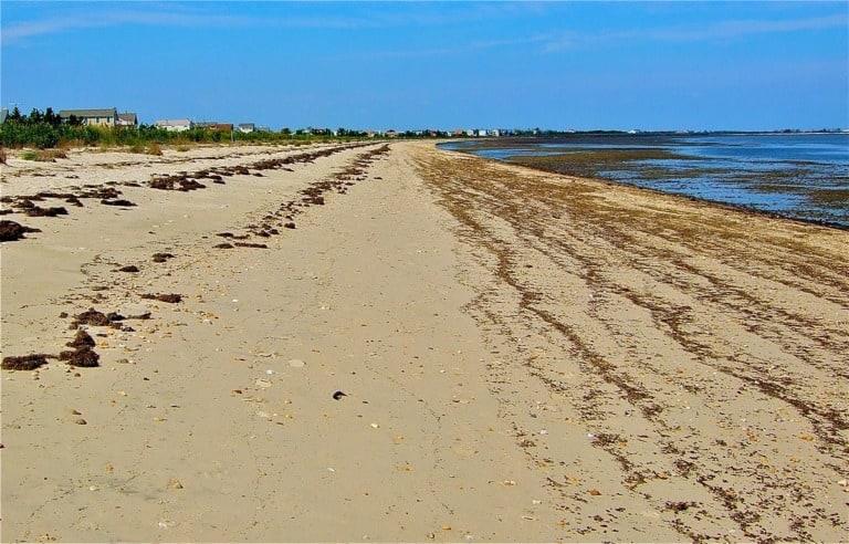 11 mejores playas de Delaware 8