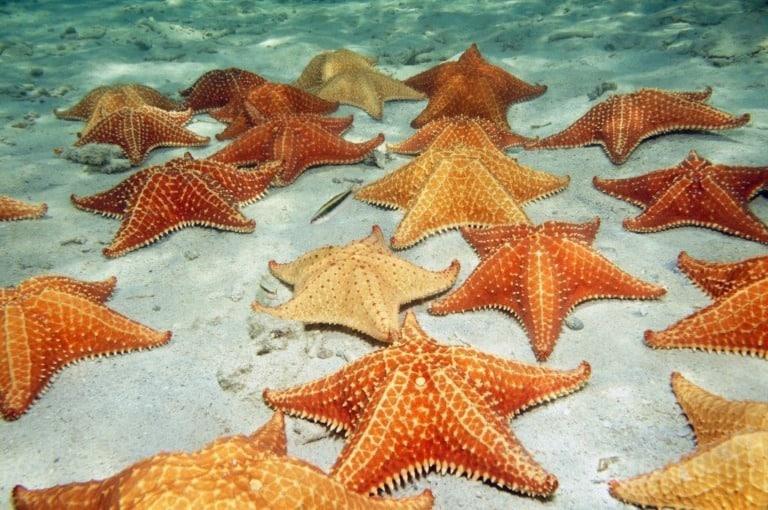 17 mejores playas de Panamá 3