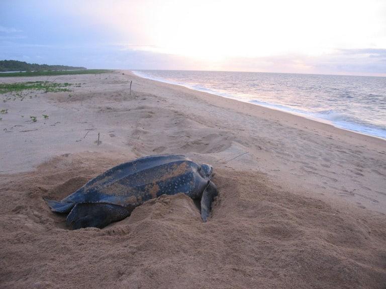 7 mejores playas de Surinam 4