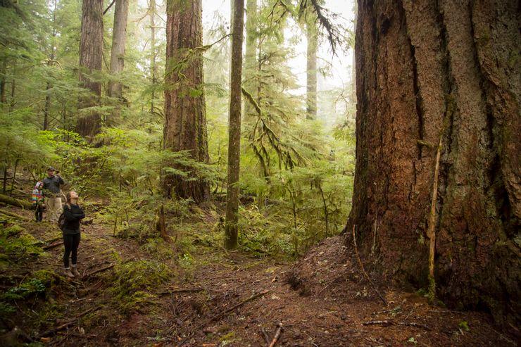 10 árboles más altos del mundo 8