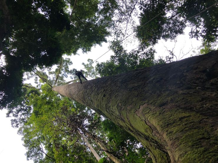 10 árboles más altos del mundo 4
