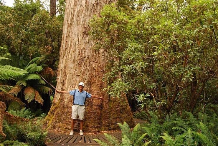 10 árboles más altos del mundo 5