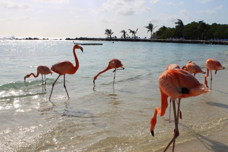 17 mejores playas de Aruba 11