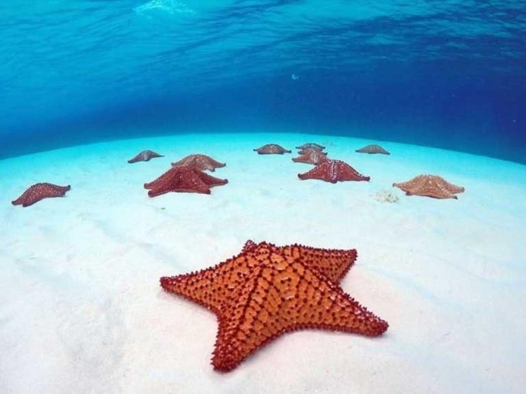 17 mejores playas de Cozumel 12