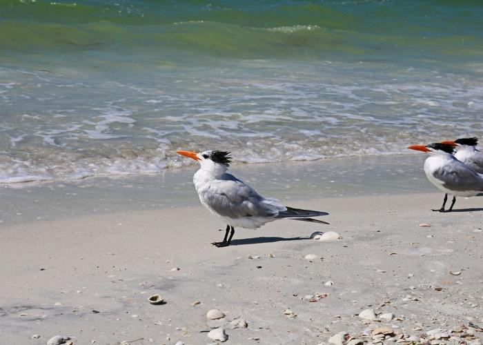 10 mejores playas de Fort Myers 8